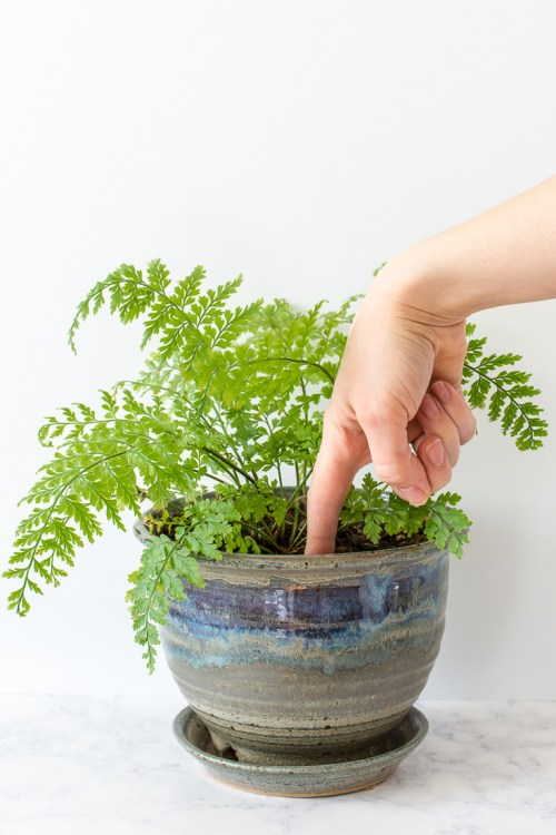 Not sure how to tell if your plants need water? Here are 5 ways to figure out whether it's time to get out the watering can. #plants #houseplants