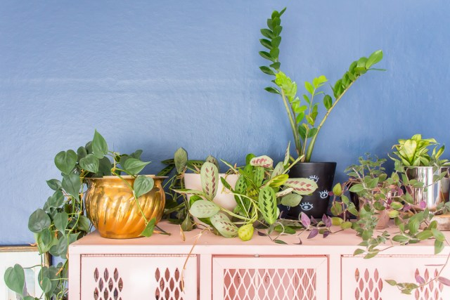 Trying to start an indoor garden? These 5 easy plants are difficult to kill, and perfect for beginners! #plants #houseplants