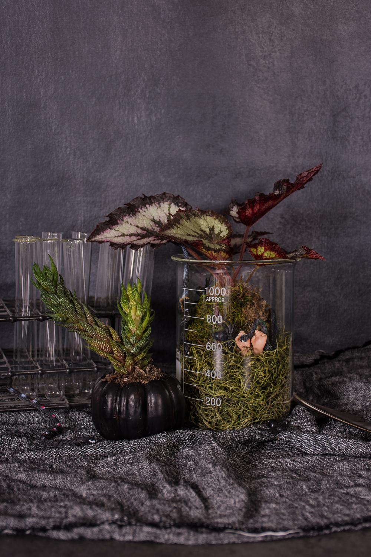 Make A Diy Halloween Terrarium