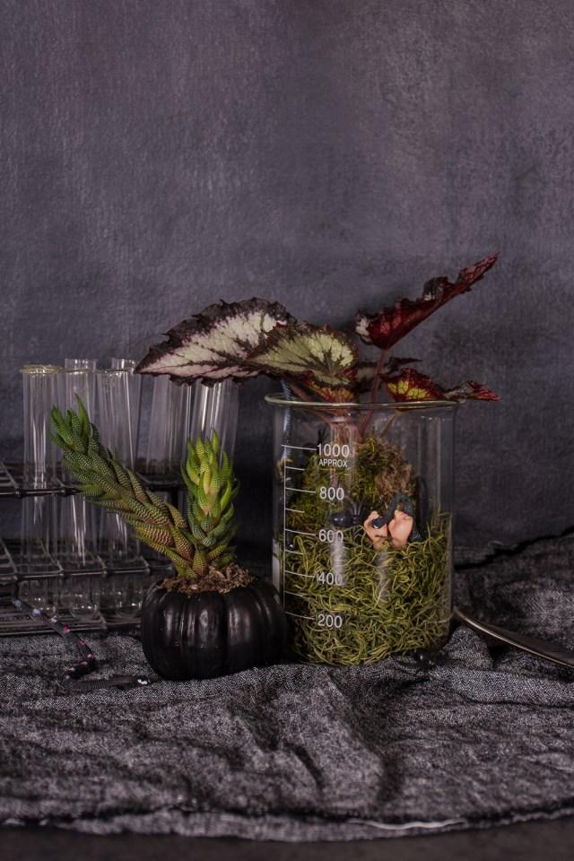 DIY Halloween terrarium