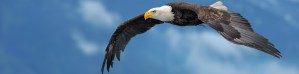 DIY Investor - picture of a bald eagle in flight symbolizing financial freedom