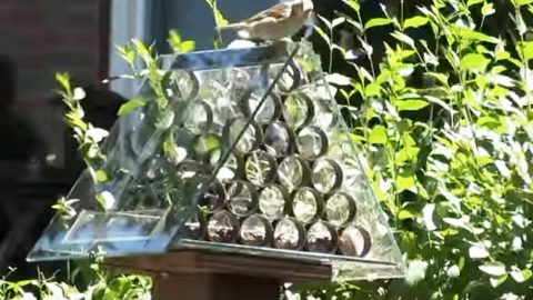 He Makes A Brilliant Squirrel Proof Bird Feeder