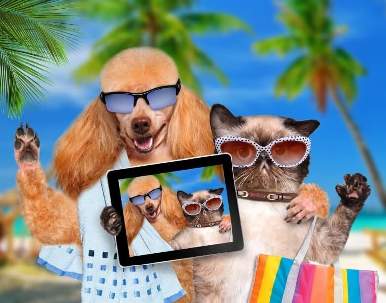 dogs on vacation iStock_000041136960Small