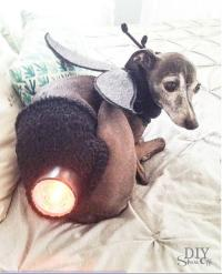 DIY Dog Costume Ideas DIY Projects Craft Ideas & How Tos ...