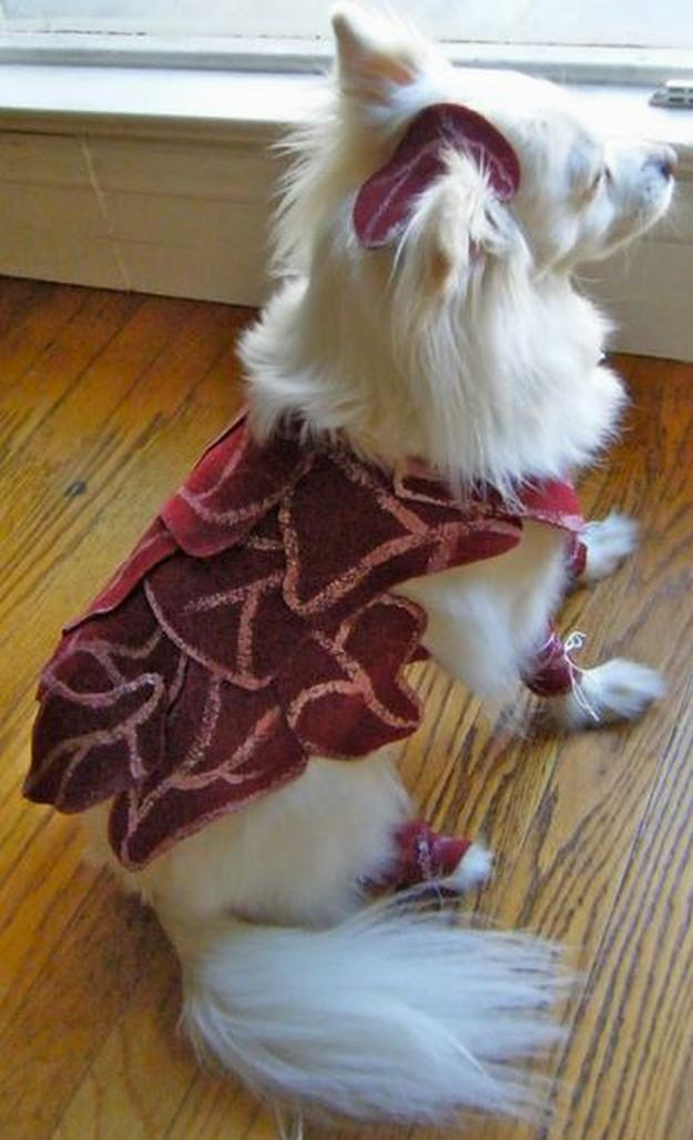 DIY Dog Costume Ideas DIY Projects Craft Ideas  How Tos