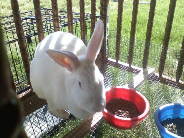 Rabbit Hutch Ideas DIY Projects Craft Ideas  How Tos for Home Decor with Videos