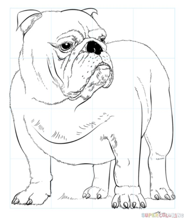 30 Ways to Draw Dogs