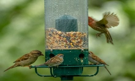 How Do You Keep Bird Seed from Molding