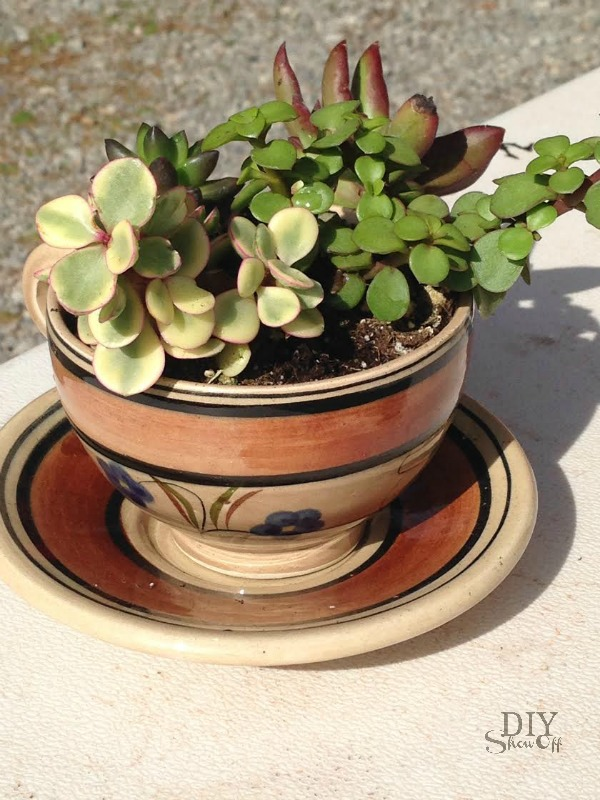 ideas decorating my living room library tea cup succulent planters - diy show off ™ ...