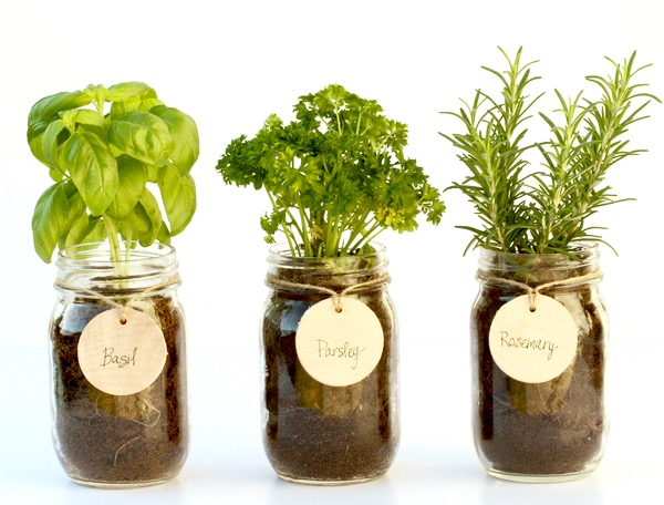 Indoor Gardening Hacks