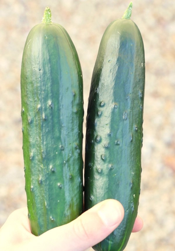 How to Grow Cucumbers From Seeds