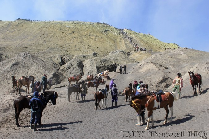 Rent a horse to cross the Sea of Sand