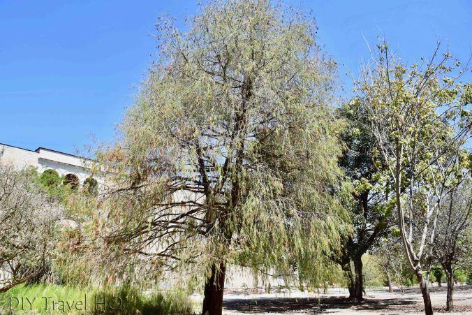 Botanical Garden Oaxaca City