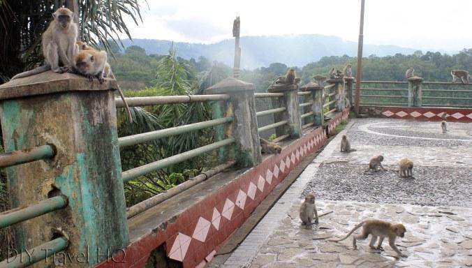 Monkeys at Panorama Park Bukittinggi