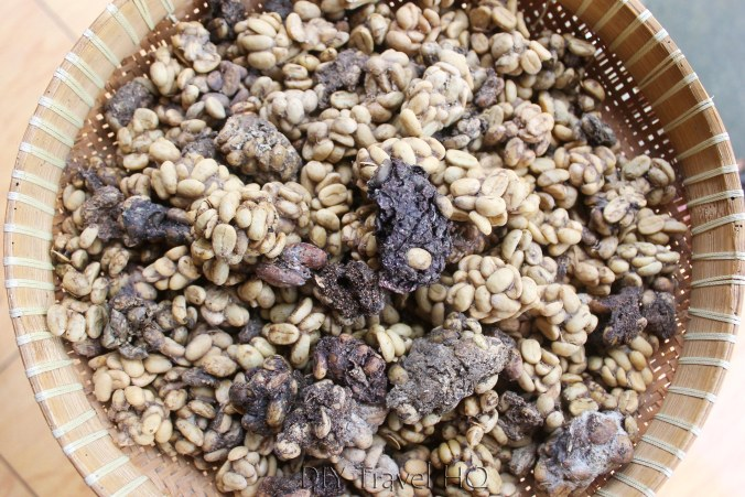 Coffee Luwak Fruits Cat Poo