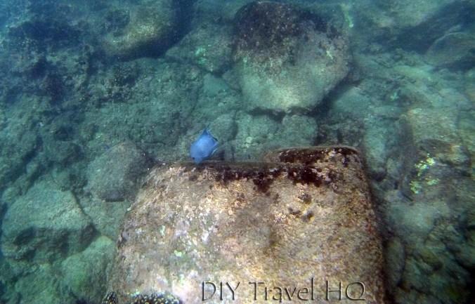 Puerto Angelito Snorkeling Fish and Rocks