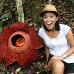 Searching for Rafflesia in Bukittinggi