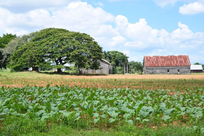 Countryside scenery on walk to Robaina