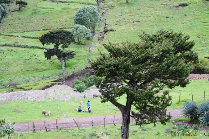 Exploring La Ventosa Family Picnic while Sheparding Sheep