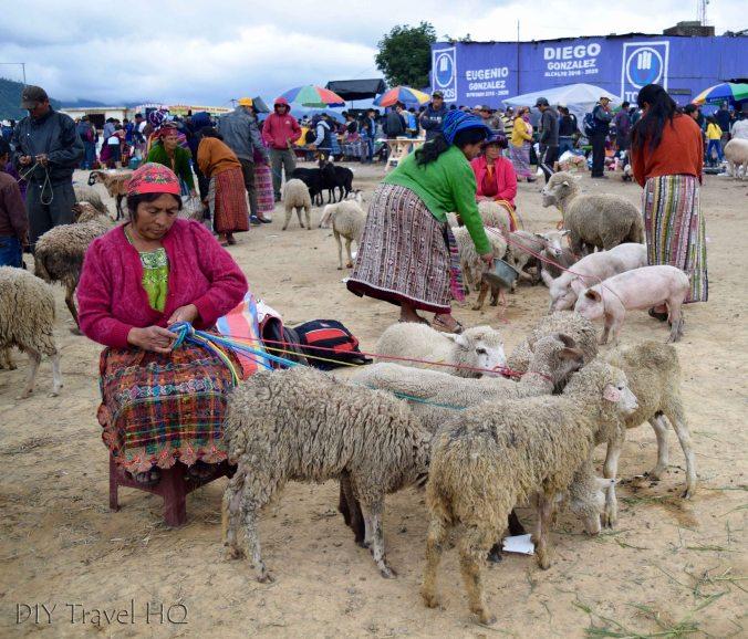 San Francisco El Alto Animal Market Sheep