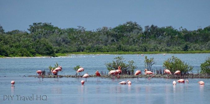 Playa Santa Lucia Laguna el Real Flamingos