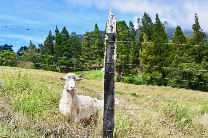 Sendero Los Quetzales Sheep Pastures