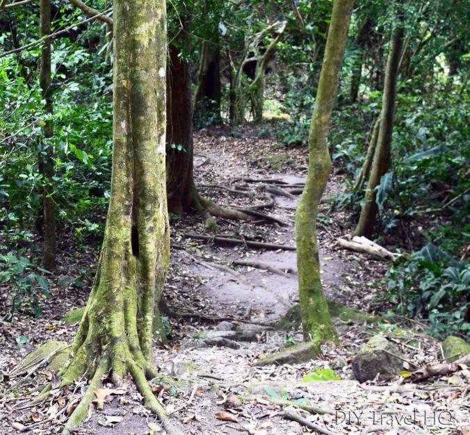 El Valle de Anton Square Trees Hiking Path