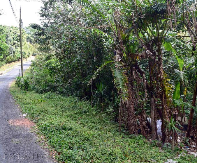 Free Entrance Square Trees of El Valle de Anton