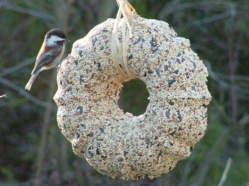 69 epic homemade diy bird feeder to craft today diyvila acorn diy bird feeder solutioingenieria Image collections