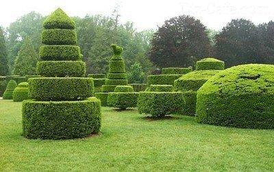 Topiari Escultura Jardim