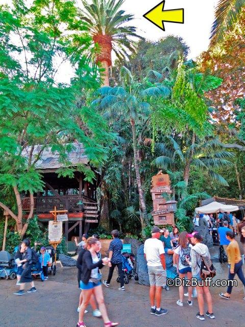 Dominguez Palm Tree above Jungle Cruise boathouse in Disneyland Adventureland