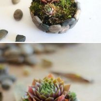 45+ Know What Gurus Think About Assorted Succulents 130