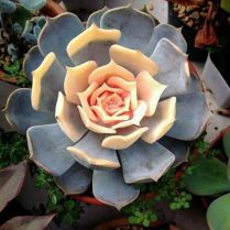 45+ Know What Gurus Think About Assorted Succulents 196