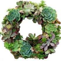 45+ Know What Gurus Think About Assorted Succulents 199