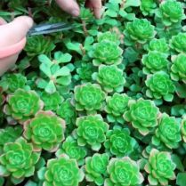 45+ Know What Gurus Think About Assorted Succulents 236
