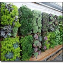 45+ Know What Gurus Think About Assorted Succulents 256