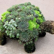 45+ Know What Gurus Think About Assorted Succulents 272