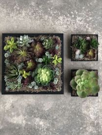 45+ Know What Gurus Think About Assorted Succulents 275
