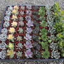 45+ Know What Gurus Think About Assorted Succulents 83