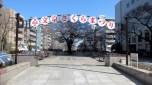 茗荷谷の駅からいつものコースで歩きます。播磨坂の桜並木。