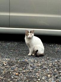 こちらは自宅のそばにいた子。かわいい子猫さん。