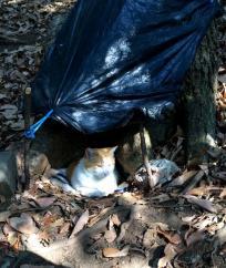 この公園では、樹の幹の凹みを利用して猫のお家を作ってくれてます。一瞬陽が射して気持ちよさそう。