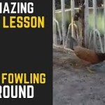 Setting Up Portable Chicken Coops In Your Backyard – It's Not As Challenging As You Think