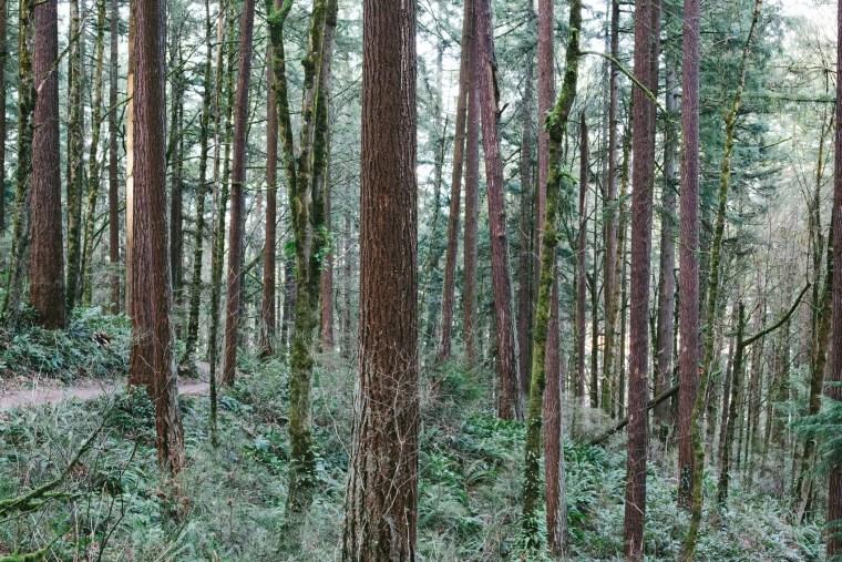 Portland_Blog-57