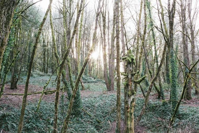 Portland_Blog-63