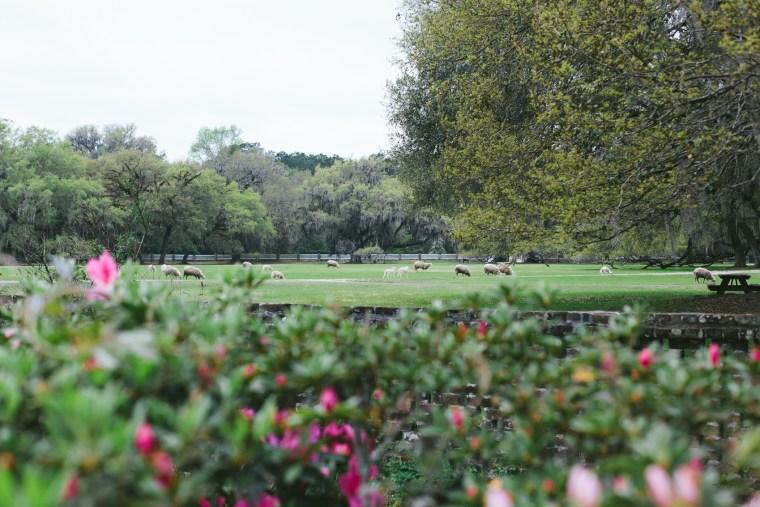 Charleston_Spring-1