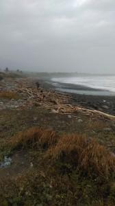 driftwood at beach near 'atolan, october 2014. djh