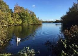 A lake in Dinton Pastures Country Park