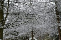 Snowy Trees in the Arboretum - Guelph, Ontario