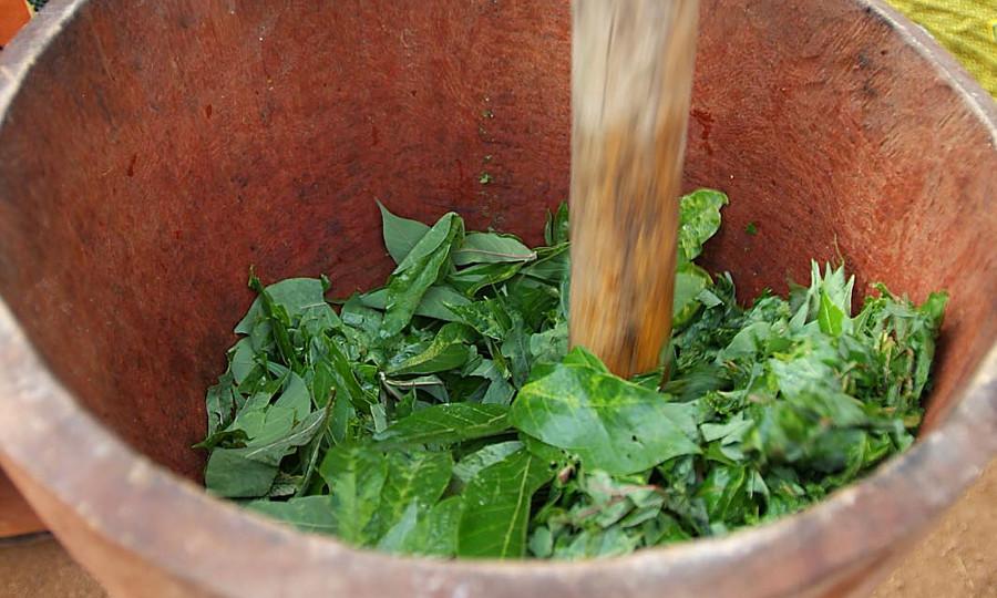 Poisson à la sauce feuille Djolo Cuisine